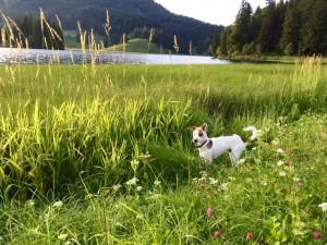 Spaziergang am wunderschönen Schliersee im August